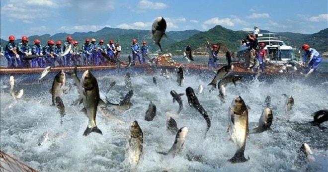 Balık Av Sezonu Sorunlarla Başlıyor