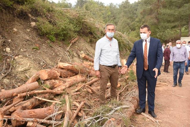 Başkan Özyiğit, Ağaç Katliamı Yapıldığı Bölgede İncelemelerde Bulundu