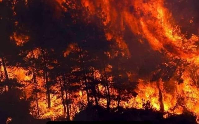 Mersin Valiliği, Ormanlık Alanlara Girişi Yasakladı