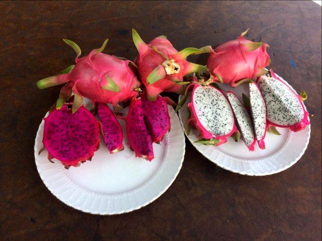 Mersin'de Ejder Meyvesi Hasadı Başladı