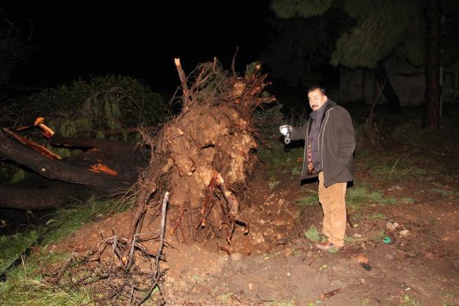 Mersin'de Hortum Ağaçları Söktü Zarar Çok Büyük
