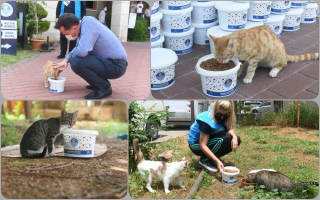 Yenişehir Belediyesi Sokak Hayvanlarını Sevindirdi