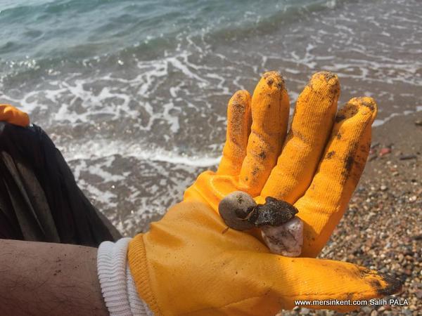 Akkuyu Büyükeceli Sahilinde Kimyasal Atık Tehlikesi
