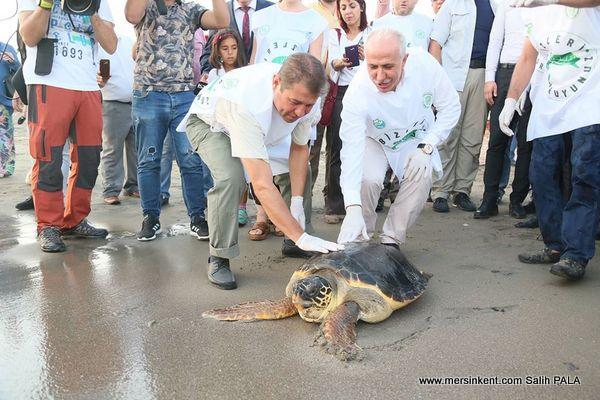 Tedavi Edilen 4 Caretta Caretta Denize Bırakıldı